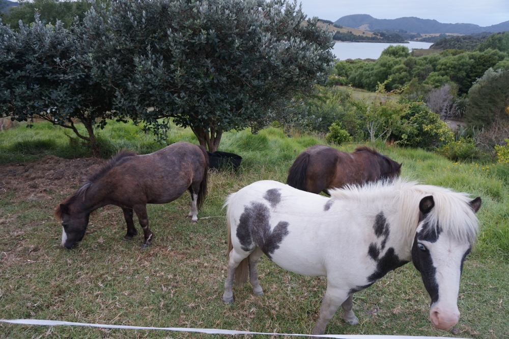 ponies, lawnmower, livestock